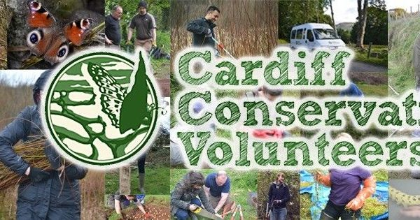 Conservation Environment Volunteer
